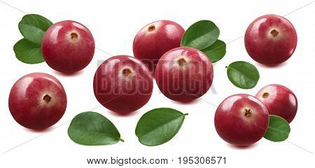 Cranberry set isolated on white background as package design element