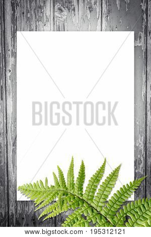 Fern leaves artistic background with copy space