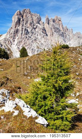 Larch wood and Cima Ambrizzola and Clroda da Lago tIalien dolomites