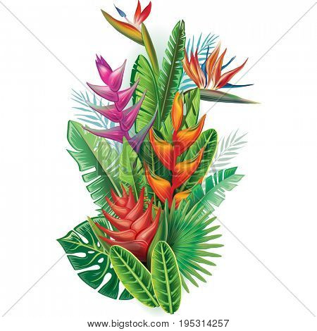 Arrangement from tropical plants and flowers. Raster version