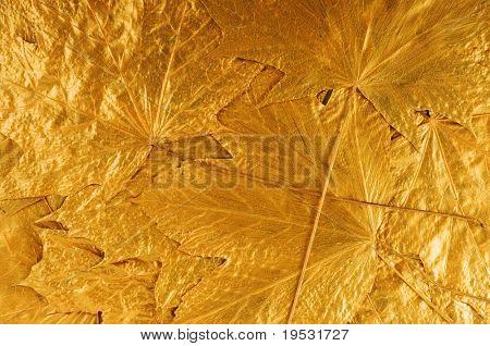 golden maple tree leaves background