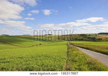 Burdale Pea Fields