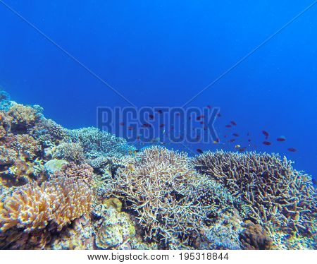 Undersea landscape with coral reef and tropical fish. Coral undersea photo. Seashore view. Coral closeup. Sea bottom with colorful coral ecosystem. Tropical seashore snorkeling. Tropic marine lagoon