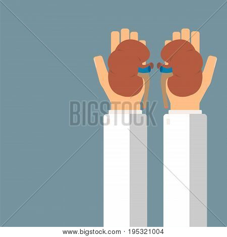 Doctor hold kidneys in hands. Transplantation or treatment kidneys. Healthcare concept. Vector illustration.