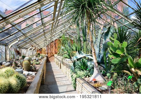 WROCLAW POLAND - JUNE 2017: Interior of the tropical hall of the Wroclaw Botanical Garden. The place of study of botanists. Hall with cacti and tropical plants.