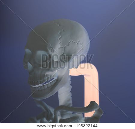Human skull model skeleton on cranium .