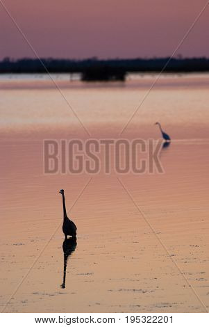 View of Egret in sound at sunset near Currituck, Outer Banks, North Carolina