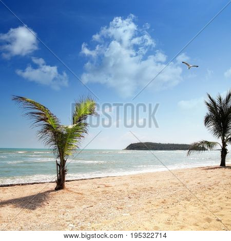 seascape image of beach with palm tree over sunny sky