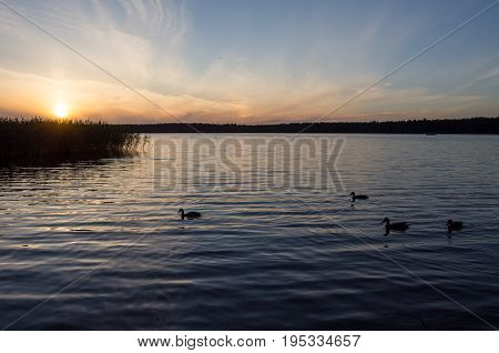 Sunset over lake and ducks, podlasie, Poland.