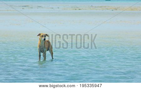 Stray Dog Hanging Around On The Beach Enjoying The Water, Marsa Alam, Red Sea, Egypt