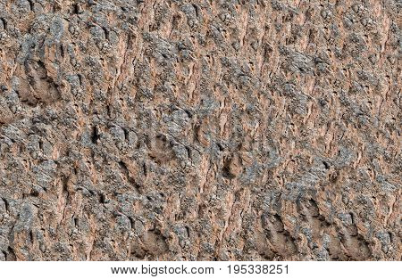 background texture of the stone brown uneven rough in the drawing channels interesting ornament