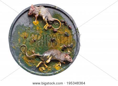 capture mouse with glue on isolated background