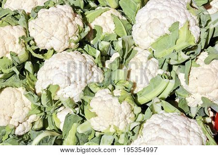 The close-up of white cauliflower in vegetables market at sunny summer day. Healthy organic food. Suitable for an abstract background.