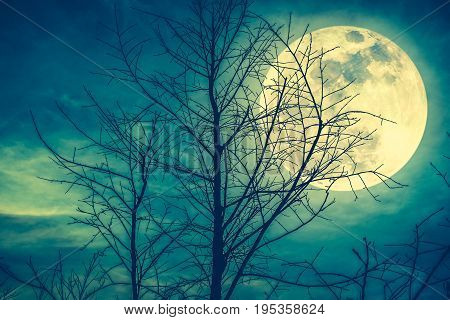 Landscape Of Sky With Super Moon Behind Silhouette Of Dead Tree. Cross Process.