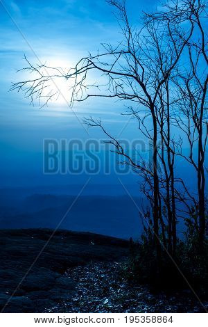 Night Landscape Of Sky With Bright Moonlight Behind Silhouette Of Dead Tree.