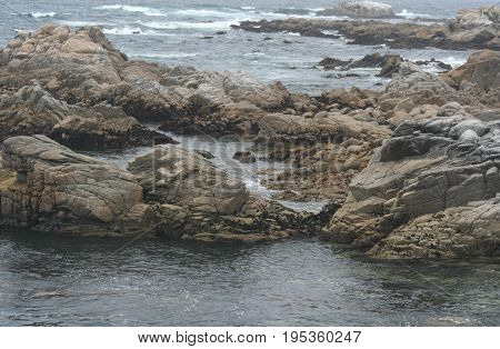 Jagged, rocky coastline off of Pacific Grove, California with blue gray water and white waves in the distance.