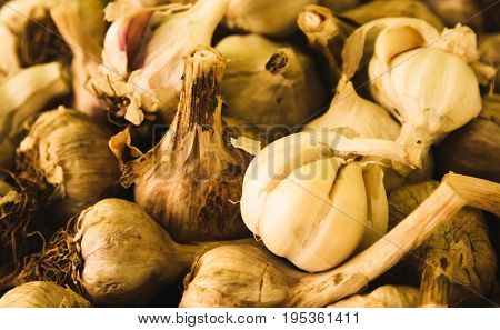 Fresh garlic picked from a nearby farmer's market.