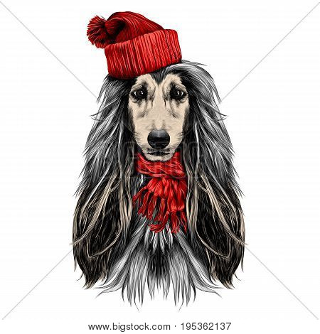 dog head full-face breed of Afghan hound in Santa hat and scarf sketch vector graphics color picture