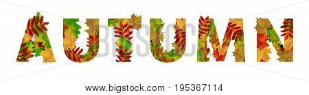 Autumn Beautiful headline decorated with red green and yellow leaves. Text on white background. Element for seasonal design. Vector illustration