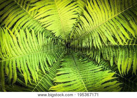 Top view of a garden fern closeup as a background.