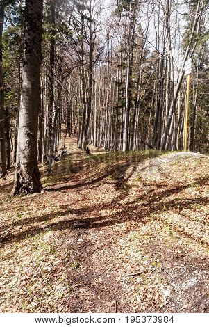 Velkofatranska magistrala red marked hiking trail in spring mountain forest with guidepost on Velka Fatra mountain range in Slovakia