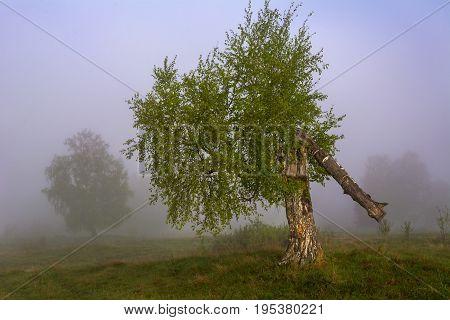 Broken tree as a symbol of life