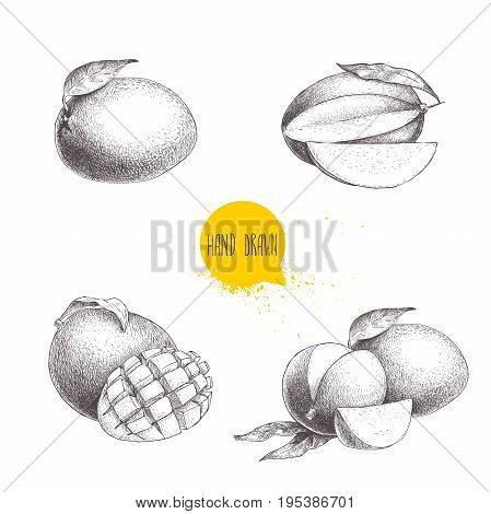Hand drawn mango fruits set with leafs and mango slices and cubes. Sketch style vector fruit illustration isolated on white background. Organic food.