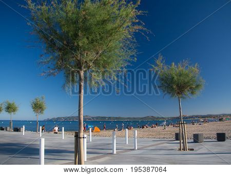 Young trees on the walk at L'Estartit beach on a sunny summer day