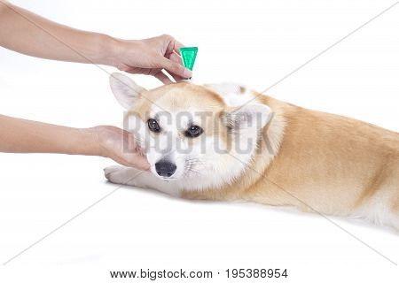 tick and flea prevention for a dog on white background