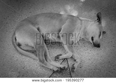 Abandoned homeless stray dog sleeping on the street.