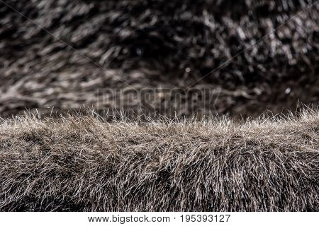 animal fur background and haircloth texture and abstract