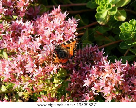 butterfly insects nature heather plants garden park red green