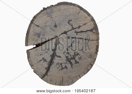 tree trunk cross section isolated on white Timber cut section