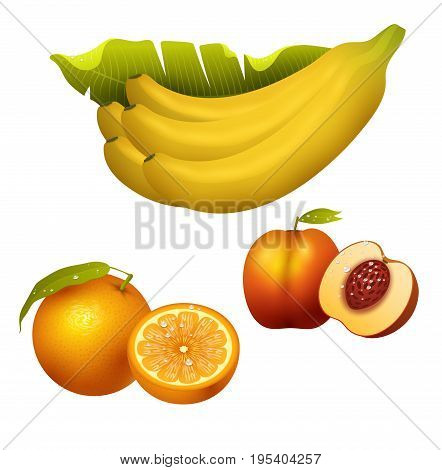 Ripe yellow banana fruits realistic juicy healthy vector illustration vegetarian diet freshness tropical snack dessert. Peel tasty refreshment delicious fruit.