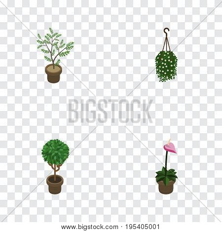 Isometric Flower Set Of Grower, Blossom, Fern And Other Vector Objects. Also Includes Blossom, Flower, Flowerpot Elements.