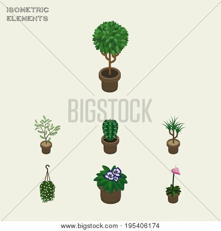 Isometric Flower Set Of Grower, Flowerpot, Peyote And Other Vector Objects. Also Includes Blossom, Flowerpot, Houseplant Elements.