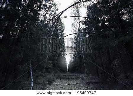 Abstract orb in a dark gloomy forest