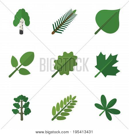 Flat Icon Nature Set Of Maple, Leaves, Foliage And Other Vector Objects. Also Includes Alder, Leaves, Oaken Elements.