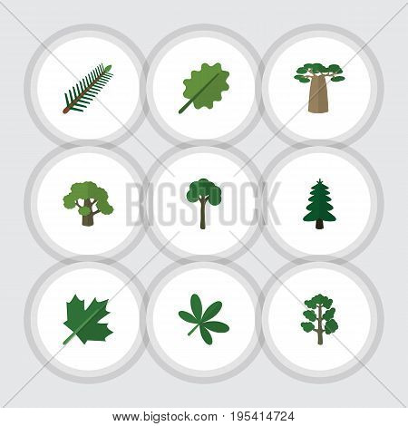 Flat Icon Bio Set Of Baobab, Tree, Forest And Other Vector Objects. Also Includes Alder, Oaken, Evergreen Elements.