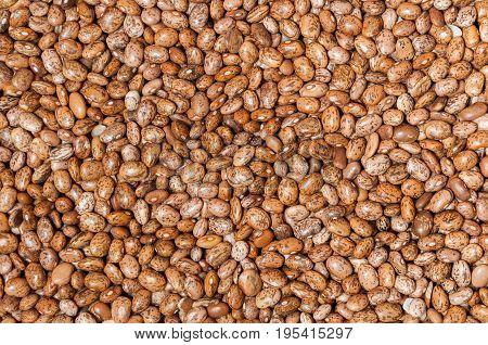 Bean. Pinto bean grains background close up. Texture beans.