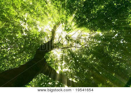 nature. pathway in the forest with sunlight poster