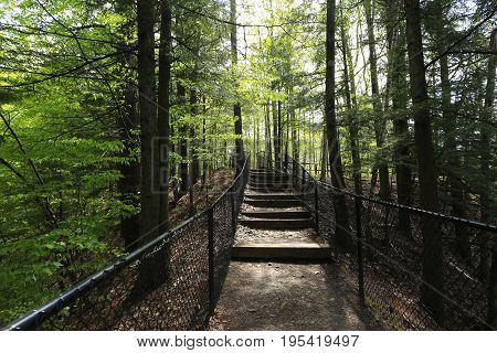 A pathway of steps leading ino a forest with a fence on either side.