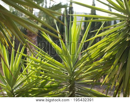 Palm fronds with palm trees nature shot