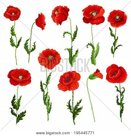Poppy flowers icons set. Vector isolated botanical symbols of blooming red poppies blossoms. Floral bouquets or springtime flourish flowery bunches design for decor or holiday greetings template