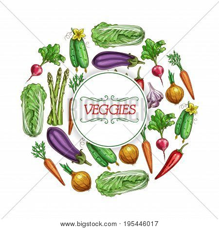 Veggies poster of vector sketch vegetables harvest chinese cabbage napa, eggplant and onion leek, carrot or radish, cucumber and chili pepper, garlic and vegetarian asparagus