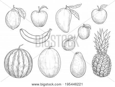 Fruits sketch isolated icons set. Vector exotic pineapple and banana, apple and lemon or lime citrus, tropical mango and apricot or peach, avocado fruit and melon or watermelon for farm harvest