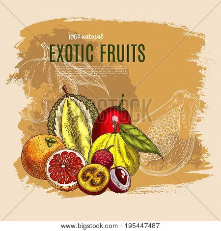Exotic fruits vector poster of durian or papaya, tropical yuzu apple, feijoa or lychee and rambutan or mangosteen, orange or lemon and pomelo citrus fruit and juicy figs harvest