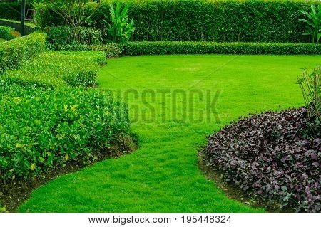 The green lawn is in the garden and has a beautiful landscaped garden design.