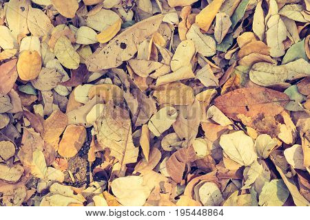 dry leaves on the ground for background