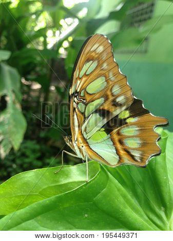 Mariposa descansando después de un largo vuelo